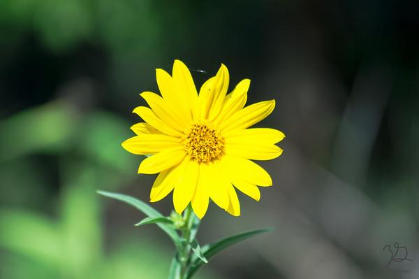 """Eisenhower State Park Flowers #1"" © 2015 Zachary Gamez"